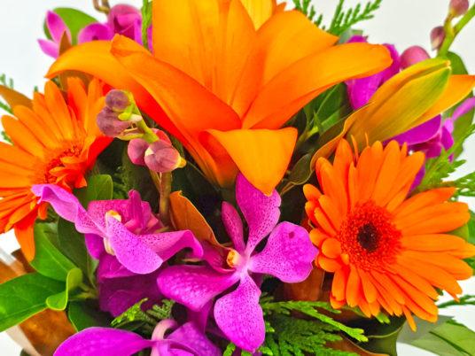 Petite Boxed Cheer Seasonal Flowers
