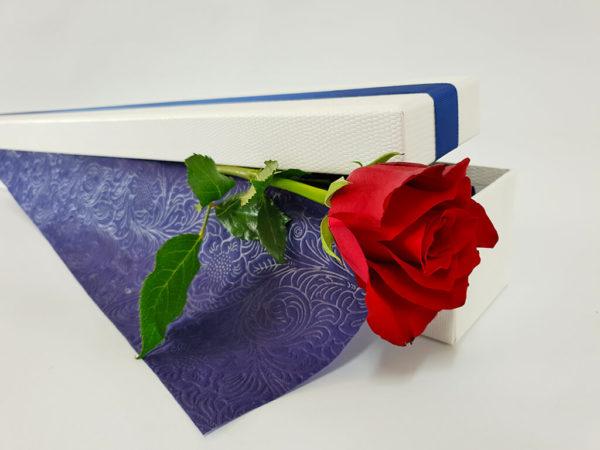 Solitaire Rose