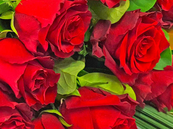 truly madly deeply in love red roses
